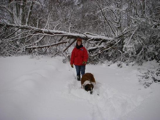 Blizzard of 2010 photo of Holly the Sainnt Bernard on the Eastern Shore of Maryland (THE TOUGH TIMES copyright photo0